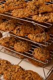 Fresh Baked Rows Layers Oatmeal Chocolate Chip Cookie Rack Royalty Free Stock Images