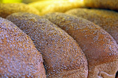 Fresh baked sesame bread Stock Photo