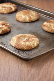Fresh baked Snicker Doodle Cookies. Snicker Doodle cookies on a cookie sheet, sitting on a counter Royalty Free Stock Photos