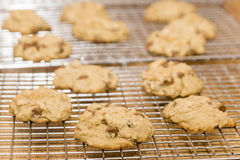 Fresh baked soft chocolate chip cookies on a cooling rack Royalty Free Stock Images