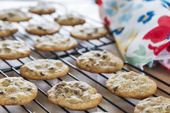 Fresh baked warm chocolate chip cookies cooling on wire racks Royalty Free Stock Photo