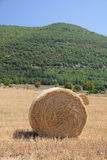 Fresh bales of hay Stock Image