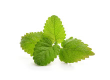 Fresh balm mint leaves. Isolated on white Royalty Free Stock Images