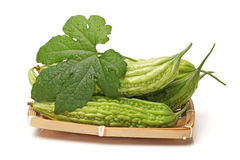 Fresh balsam pear Stock Image