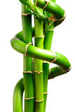 Fresh bamboo 3 Stock Photography