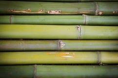 Fresh bamboo background. Royalty Free Stock Photography