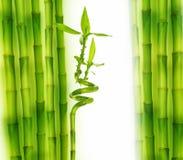 Fresh bamboo border stock photos