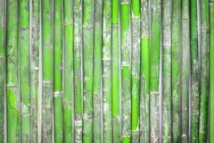 Fresh bamboo fence background,wooden wall. Close up Fresh bamboo fence background,wooden wall stock photos