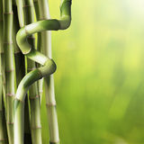 Fresh Bamboo Stock Photos