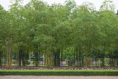 Fresh bamboo in garden Stock Photo