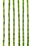 Fresh bamboo isolated Royalty Free Stock Photo