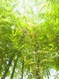 Fresh bamboo leaves. Fresh bamboo leaves border, green plant stalk at summer in the garden Stock Images