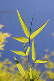 Fresh bamboo leaves against blue sky. Bright bamboo leaves against blue sky Royalty Free Stock Photo