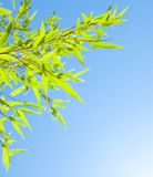 Fresh bamboo leaves border Royalty Free Stock Images