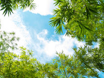 Fresh bamboo leaves border Stock Photo