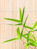 Fresh bamboo leaves border with water drop . Royalty Free Stock Photo