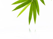 Fresh bamboo leaves border with water drop isolated on white background, botanical zen forest, tropical spa decoration, backdrop royalty free stock photos