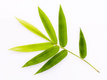 Fresh bamboo leaves border with water drop isolated on white background, botanical zen forest, tropical spa decoration, backdrop royalty free stock photography