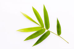 Fresh bamboo leaves border with water drop isolated on white bac Stock Photo