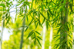 The fresh bamboo leaves Royalty Free Stock Images