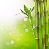Fresh Bamboo Royalty Free Stock Photo