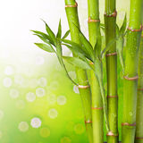 Fresh Bamboo Royalty Free Stock Photography