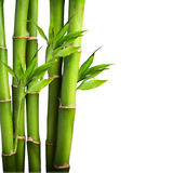 Fresh Bamboo Royalty Free Stock Images
