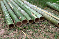 Fresh bamboo pipe cut Stock Photography