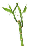 Fresh bamboo stem with leaves Stock Photo