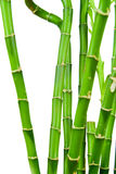 Fresh bamboo stems Stock Images