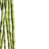 Fresh Bamboo Stock Photo