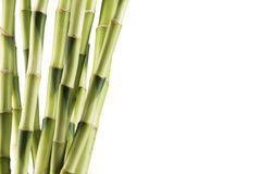Fresh Bamboo Stock Image