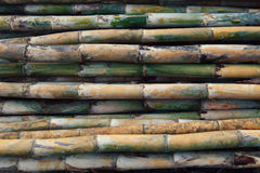 Fresh bamboo wood for multipurpose Royalty Free Stock Photography