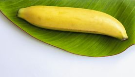 Fresh banana has soft pulpy flesh and yellow skin when ripe with. Banana leaf on white background. Copy space for your text Royalty Free Stock Photo