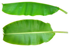 Fresh Banana Leaf Isolated Stock Photography