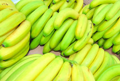 Fresh bananas Stock Image