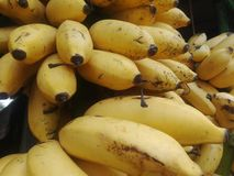fresh bananas king of the fruit world royalty free stock images