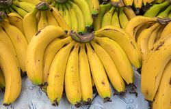 Fresh bananas at local city market. Fresh bananas at local city farmers market royalty free stock photography