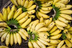 Fresh bananas at market place Stock Image