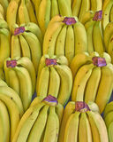Fresh bananas for sale Stock Image