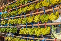 Fresh bananas Stock Photos
