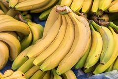 Fresh bananas sold at city market. Fresh bananas sold at city farmers market stock photos