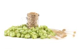 Fresh barley and hop. Royalty Free Stock Photography