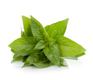 Fresh basil Stock Photography