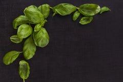 Fresh Basil Background. Royalty Free Stock Images