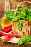 Fresh basil in a basket with chili and vegetable oil. On wooden Stock Images