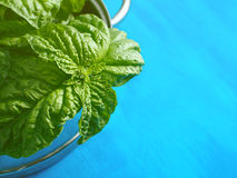 Fresh basil on blue Royalty Free Stock Photography