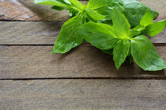 Fresh basil on the boards Stock Images
