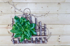 Fresh Basil Bouquet on Rustic Background Stock Image