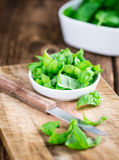 Fresh Basil (close-up shot) Royalty Free Stock Photos
